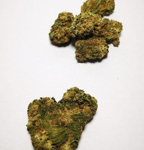 Comment reconnaître l'odeur du CBD ou cannabis légal ?